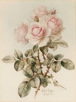 Nirvana rose