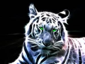 tigrovo oko