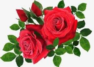 vrtnica 5