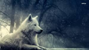 winter wolf *_*
