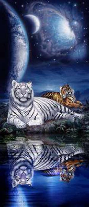 you are tiger